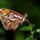 My friend Butterfly by loiteke