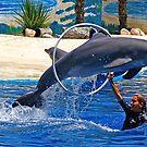 Dolphin - Jumping Dolphin at the Aquarium by Calin Lapugean