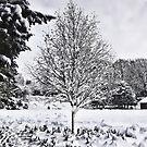 Snowed In - Winter in Sheffield, UK by Calin Lapugean