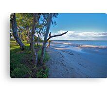 Nature on show, Banksia Beach, Bribie Island Canvas Print