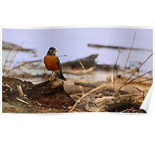 Spring Roost Poster