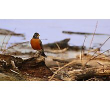 Spring Roost Photographic Print