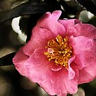 Pink Camellia by Evita