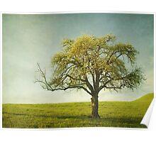 Appletree Poster