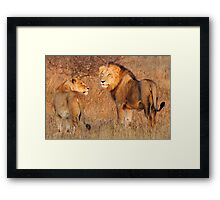 Early Morning Stroll Framed Print