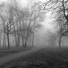 Misty April  by PPPhotoArt