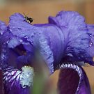 purple in pose by katpartridge