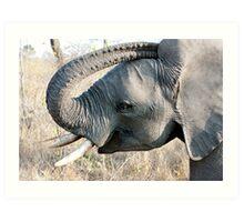 Young Elephant Art Print