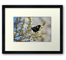 Butterfly on Yellow Framed Print