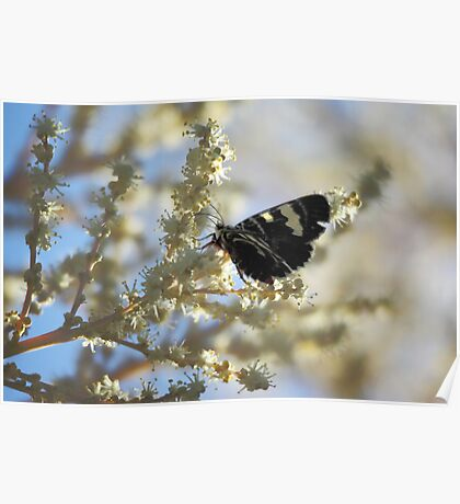 Butterfly on Yellow Poster