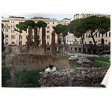 Oh So Rome - Cats, Umbrella Pines and Ancient Ruins Poster