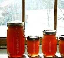 Honey harvested in the dead of winter by xtalline