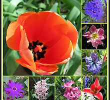 Tulips and Hyacinths Collage by BlueMoonRose