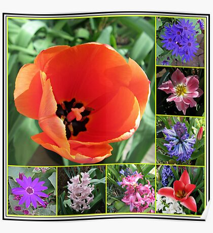 Tulips and Hyacinths Collage Poster