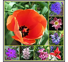Tulips and Hyacinths Collage Photographic Print