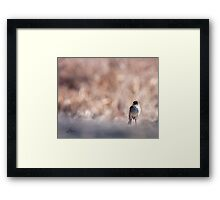A Questioning Phoebe Framed Print