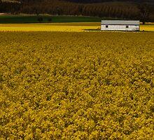 Yellow Fields by cherryw