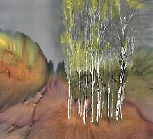 Birch Grove 1 by carolyndoe