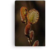 Cracking Up Canvas Print
