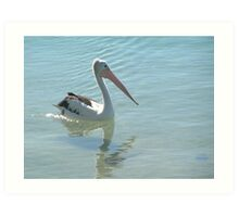 Cool Pelican Art Print
