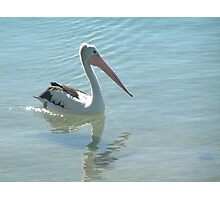 Cool Pelican Photographic Print