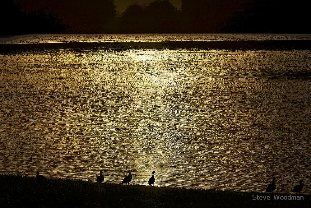 Ducks on the Manning by Steve  Woodman