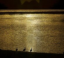 Ducks on the Manning by Steve  Woodman