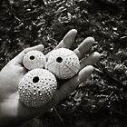 Sea urchin shells in hand by xtalline