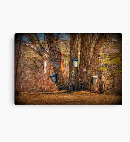 Pass the Maple Syrup Canvas Print