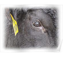 Bull's Eye Poster