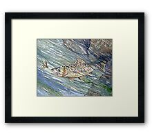 Taking the Bait Framed Print