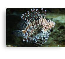 Lionfish, Atlanta Aquarium Canvas Print