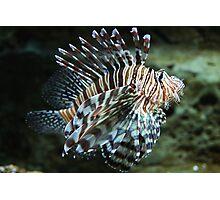 Lionfish, Atlanta Aquarium Photographic Print