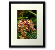 Unique Brown Orchid Framed Print