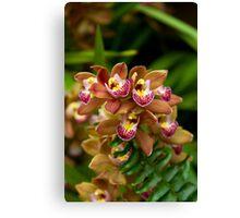 Unique Brown Orchid Canvas Print