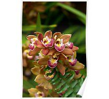 Unique Brown Orchid Poster