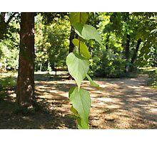 Selective focus on a young branch of a tree with leaves Photographic Print