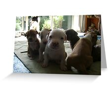 Fostered Puppies Greeting Card
