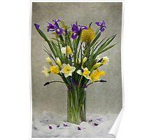Daffodils and Irises Poster