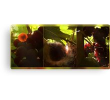 Nest in a vineyard Canvas Print