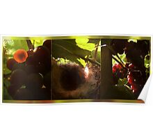 Nest in a vineyard Poster