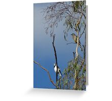 High in a Tree Top. Greeting Card