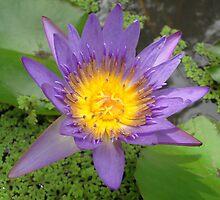 In Blossom by gunda96
