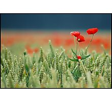Red is the beating heart of love Photographic Print