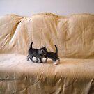 Kittens. by Vitta