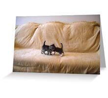 Kittens. Greeting Card