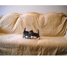 Kittens. Photographic Print