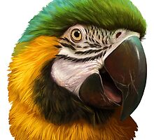 Blue and gold macaw realistic painting by lifewithbirds