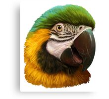 Blue and gold macaw realistic painting Canvas Print