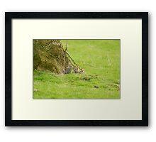 Rabbit kittens Framed Print